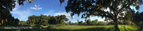 Swamp in Florida