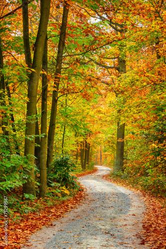 Garden Poster Road in forest Autumn forest