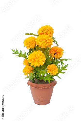 beautiful bouquet of flower calendula in color plastic flowerpot Canvas Print