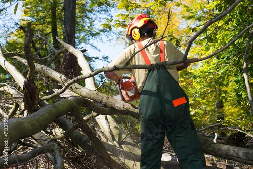 Fotografie, Obraz  Waldarbeiter kämpft sich durch's Unterholz