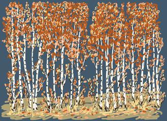 Fototapeta Jesień autumn birches