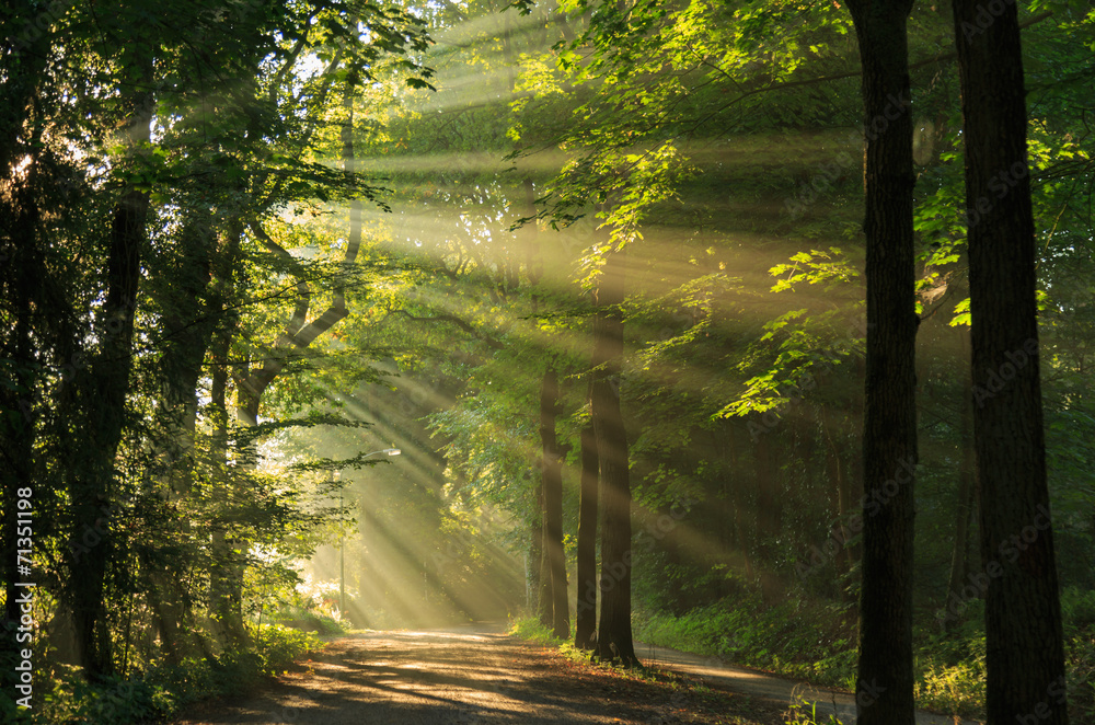 Fototapeta Sun rays shining through the trees in the forrest.