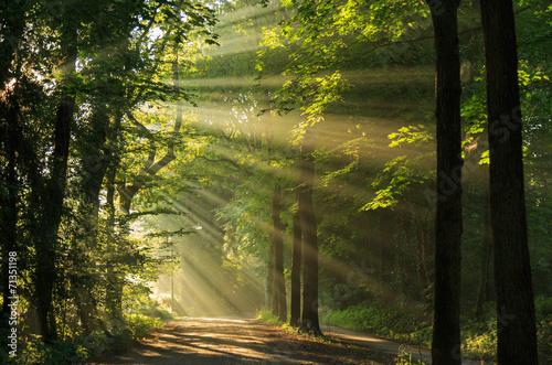 Fotografie, Obraz  Sluneční paprsky prosvítající mezi stromy v lese.
