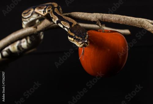 Fotografía  Adam & Eva