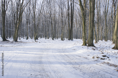 Fotografie, Obraz  Zimowy las
