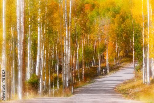Fotobehang Natuur Scenic drive through Aspen trees