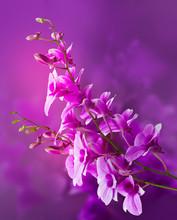 Colorful Purple Orchids, Flower Vibrant Concept