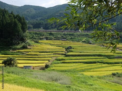 Aluminium Prints Rice fields 棚田の風景1