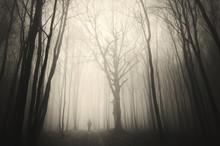 Man Walking Past A Huge Old Tree In A Dark Spooky Forest