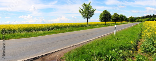 Fotografie, Obraz  Landstrasse mit Bäumen
