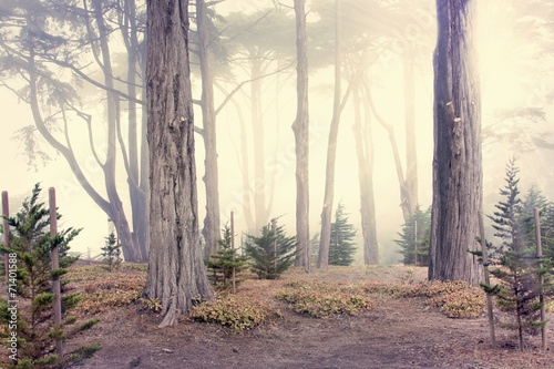 morning fog in the woods