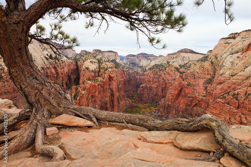 Aluminium Prints Zion Canyon