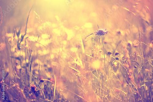 Foto op Plexiglas Retro Blurry vintage meadow background