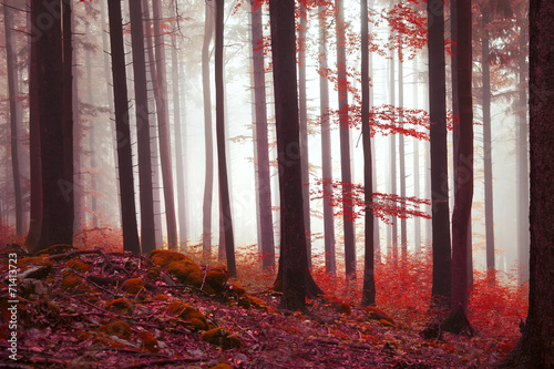 Magic red colored forest