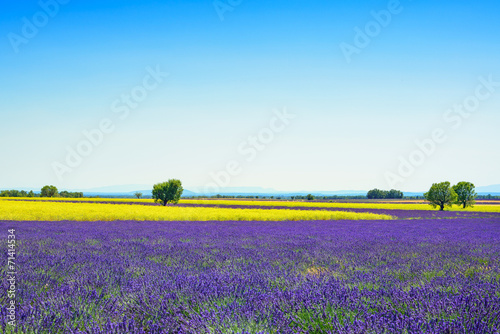 Spoed Foto op Canvas Violet Lavender, yellow flowers blooming field and trees. Provence, Fra