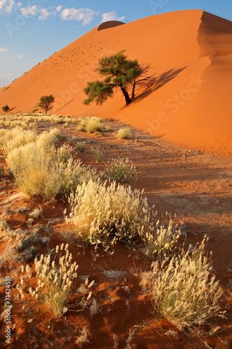 Tuinposter Oranje eclat Desert landscape, Sossusvlei