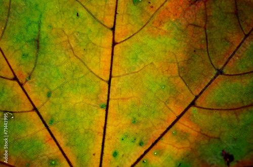 jesienny liść - fototapety na wymiar