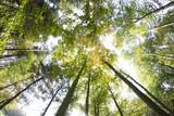 Korony drzew, jesień