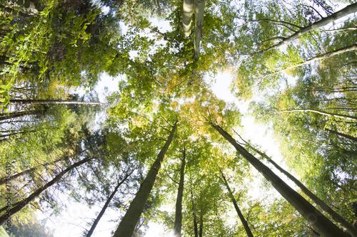 Fototapeta Korony drzew, jesień obraz