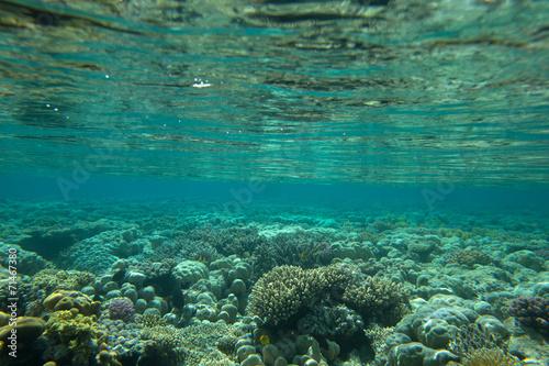 Morze koralowe
