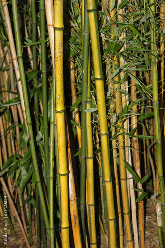 Poster Bamboe bambus