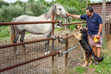 Horse Dog And Man