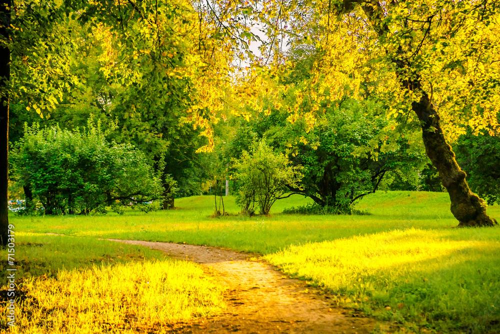 Leinwandbild Motiv - romas_ph : Sunrise in autumn forest