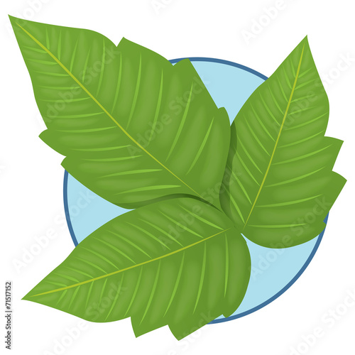 Fotografie, Obraz  Nature Plant Poison Ivy