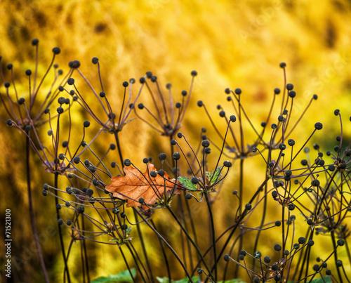 Poster Oranje eclat anemone flower