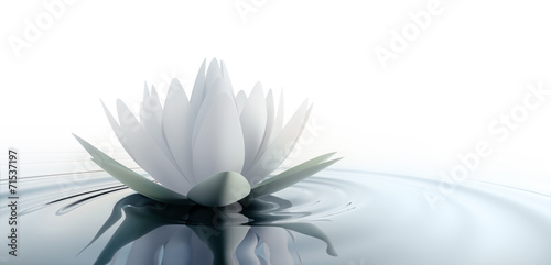 Foto op Canvas Lotusbloem Einzelne Lotusblüte