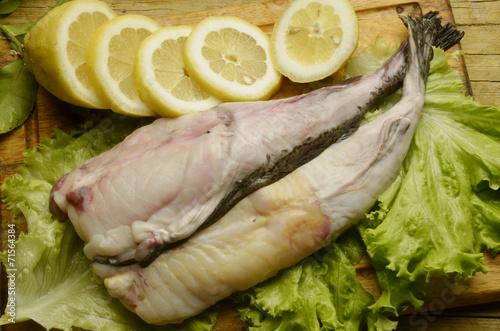 Fotografie, Obraz  Lophius piscatorius Rape común Angler Rana pescatrice