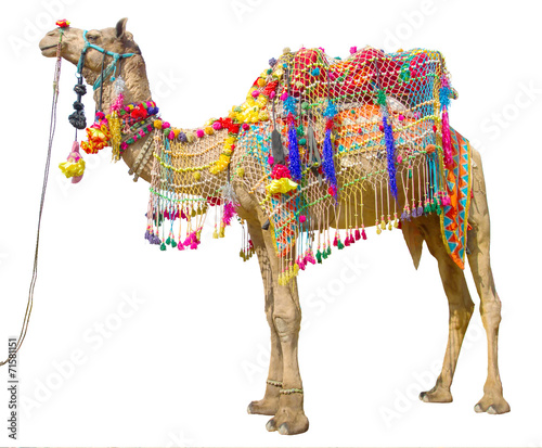 Photo sur Toile Chameau Camel with traditional decoration isolated on white