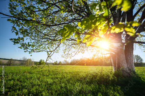 Foto op Plexiglas Landschappen Spring