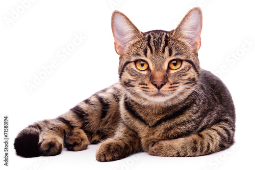 Foto op Aluminium Kat Portrait of brown-eyed cat isolated on white background