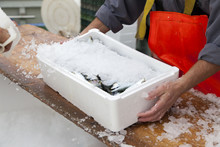 Fishermen Covering With Ice Fr...