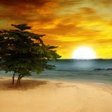 plaża morska, drzewo i fantastyczny zachód słońca - 71599527
