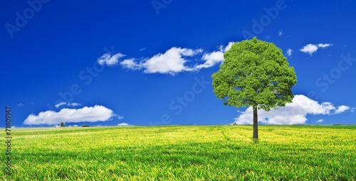 Fotobehang Donkerblauw el arbol de la colina verde