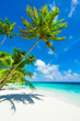 Rest in Paradise - Malediven - Postkartenmotiv mit schräger Pal