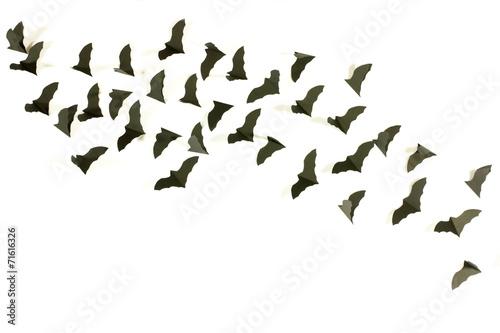 Canvas Print bats fluttering