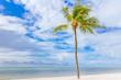 Coconut tree on a white sand beach.