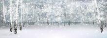 Vector Winter Snowy Landscape, Birch Forest.