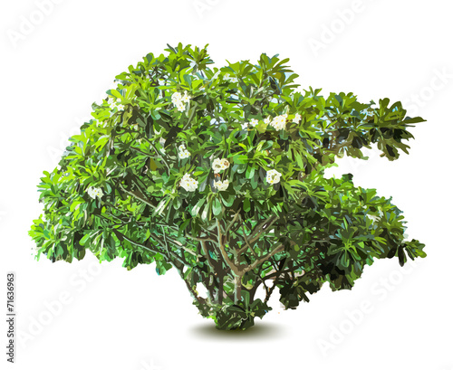 Foto Plant with flowers and leaves. Decorative tree. Vector
