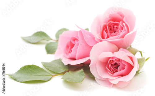 Pink Roses #71641544