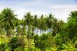 Green View Under Palms