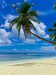 Sea Heaven Coconut