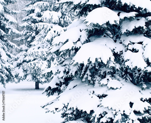 Winter landscape with snow covered trees #71664787