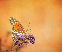 Gulf Fritillary Butterfly On T...
