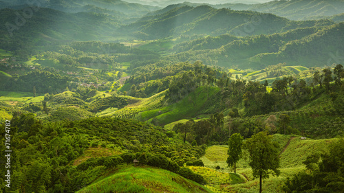 Fototapeta landscape with green corn field, forest, mountains obraz na płótnie