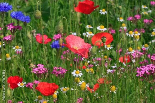 Plakat wielokolorowe kwiaty na łące
