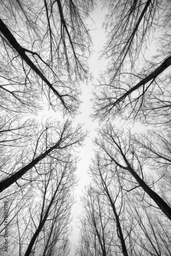 czarno-bialy-las-drzew-sfotografowany-od-dolu
